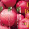 有限会社堀新聞店様のりんご通信販売チラシのアイキャッチ画像です。